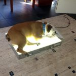 Light box? or Doggy bed?